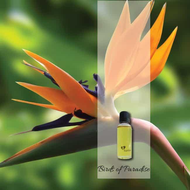 birds-of-paradise-aroma-oil
