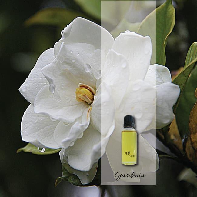 gardenia-aroma-oil
