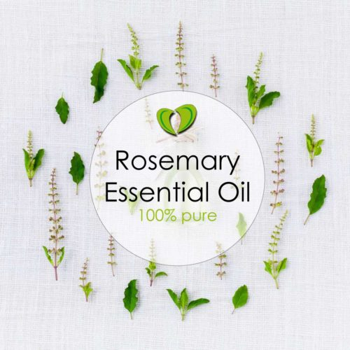 Rosemary Essential Oil NZ