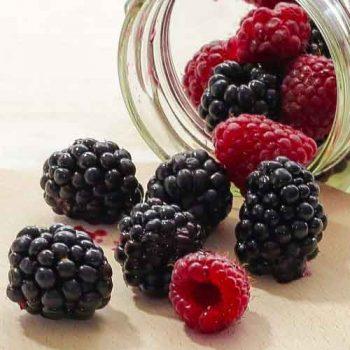 blackberry vanilla aroma oil