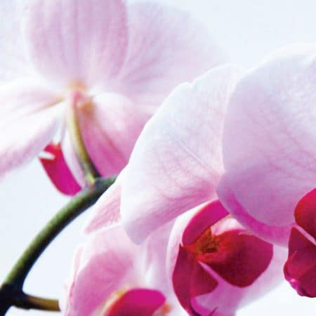Island Orchid Aroma Oil