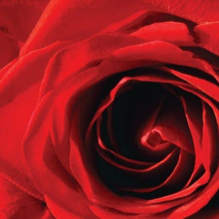 Red Rose Aroma Oil