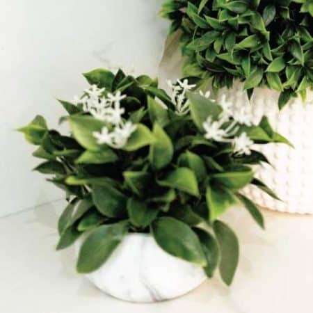 jasmine and mint aroma oil